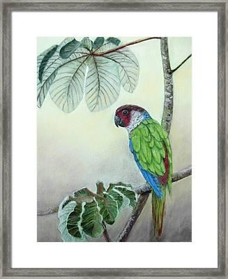 Kasanga Bajo El  Guarumo Framed Print