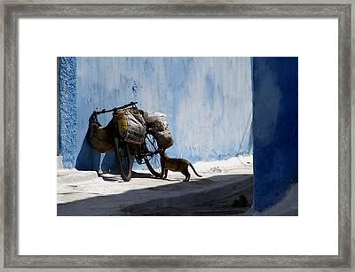 Kasbah Cat Framed Print by Peter Verdnik