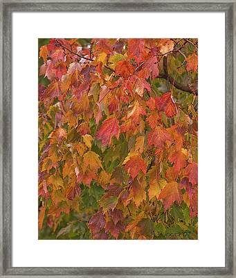 Framed Print featuring the photograph Kates Leaves by Michael Flood