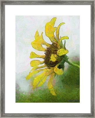 Kate's Sunflower Framed Print by Jeff Kolker