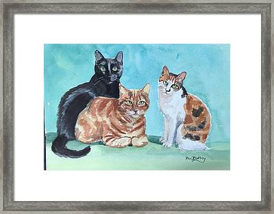 Kates's Cats Framed Print