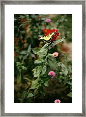Kathy's Butterfly Framed Print by Lynard Stroud