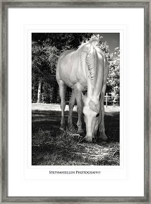 Katie Grazing Framed Print by Stephanie Hayes
