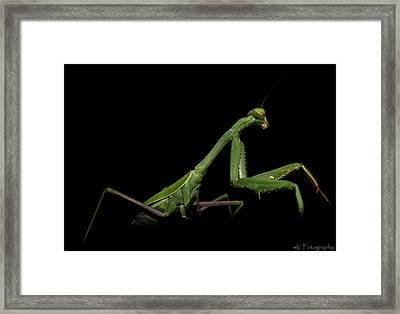 Katydid In Black Framed Print