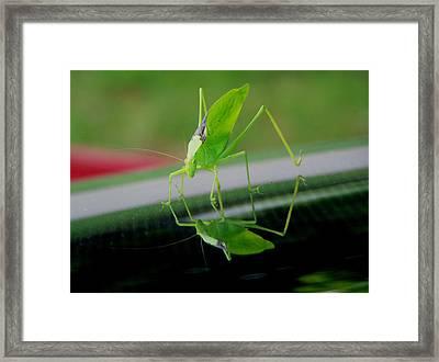 Katydid  Framed Print by Karen Scovill