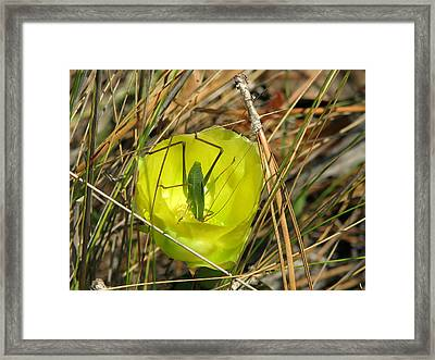 Framed Print featuring the photograph Katydid What by Peg Urban