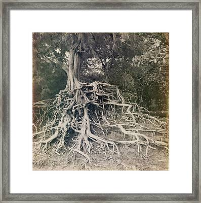 Framed Print featuring the photograph Kauai by Lucian Capellaro