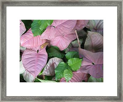 Framed Print featuring the photograph Kauai  Pinks by Carol Sweetwood