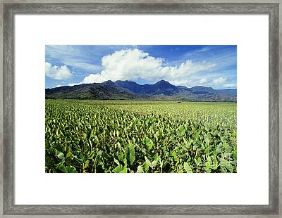 Kauai, Wet Taro Farm Framed Print by Bob Abraham - Printscapes