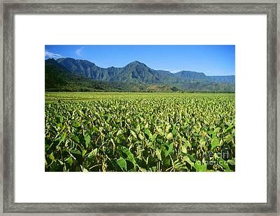Kauai, Wet Taro Farm Framed Print by Himani - Printscapes