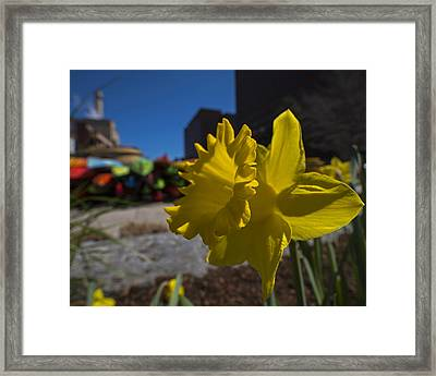 Kayak Launch Daffodil Cambridge Ma Framed Print by Toby McGuire
