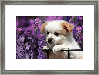 Kc In Flowers Framed Print by Marjorie Imbeau