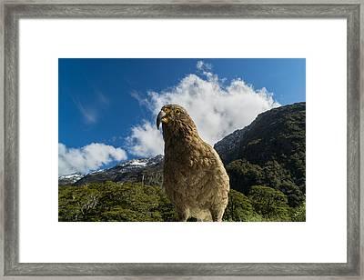 Kea Framed Print by Ian Riddler