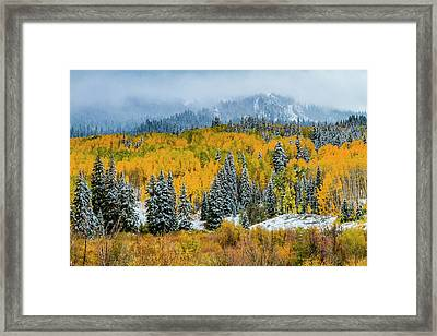 Kebler Pass Fall Color In The Snow Framed Print by Teri Virbickis