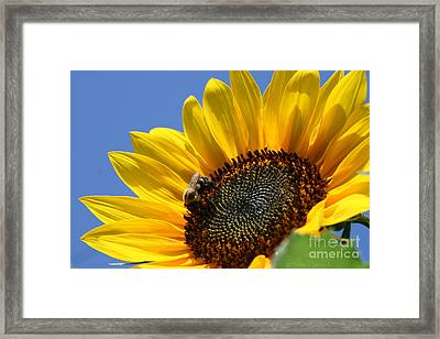 keep facing the Son Framed Print by Debra Straub