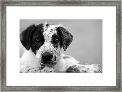 Keep Me Framed Print by Amanda Barcon
