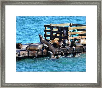 Keep Off The Dock - Sea Lions Can't Read Framed Print
