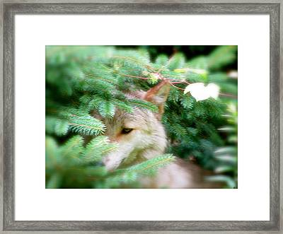 Keep Out Of Sight Framed Print by Debra     Vatalaro