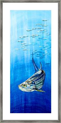 Tarpon Below Framed Print
