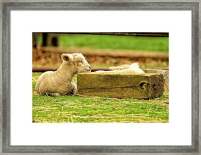 Keep Your Chin Up Higgghhh  Framed Print by Geraldine Scull