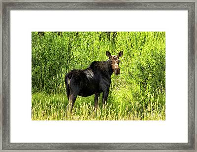 Keep Your Distance Wildlife Art By Kaylyn Franks Framed Print