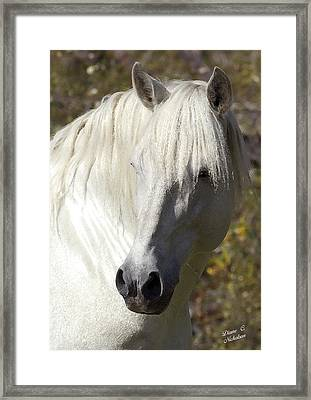 Keeper Of The Watch Framed Print by Diane C Nicholson