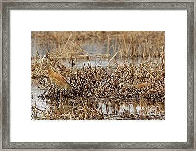 Keepers Of The Nest Framed Print by Natural Focal Point Photography