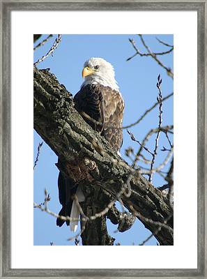 Keeping An Eye On Things Framed Print by Dave Clark