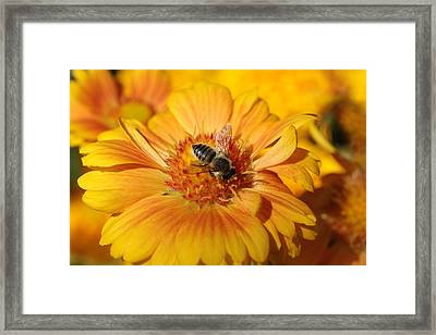 Keeping Busy  Framed Print