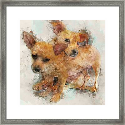 Keeping Each Other Warm - Chihuahua Puppies Watercolor Portrait Framed Print