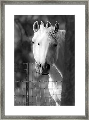 Keeping Their Eyes On Us Framed Print by Wes and Dotty Weber