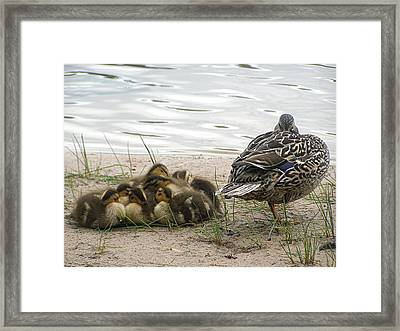 Framed Print featuring the photograph Keeping Watch by Angie Rea
