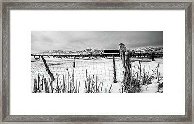 Keeping Watch Black And White Framed Print