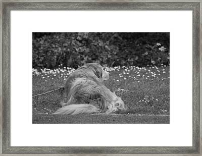 Keeping Watch Framed Print by Cian Fahey