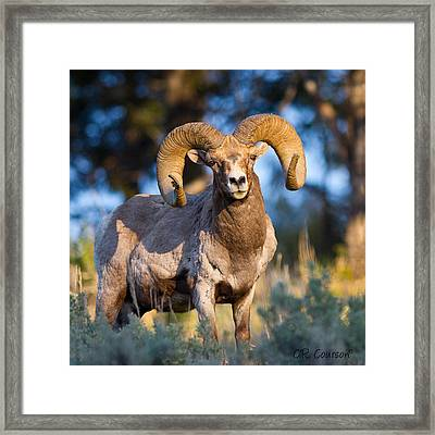 Keeping Watch Framed Print by CR  Courson