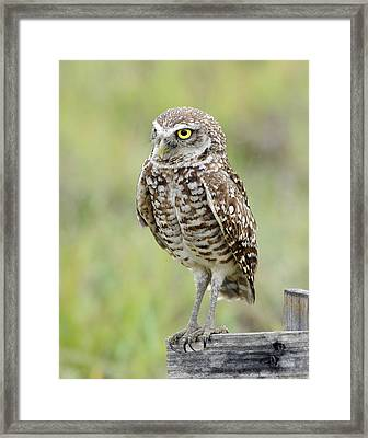 Keeping Watch Framed Print by Keith Lovejoy