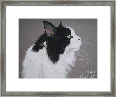 Keeps - Maine Coon Framed Print by Joanne Simpson