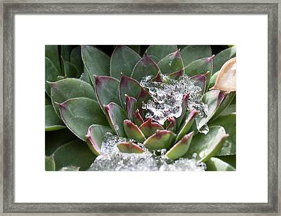 Kelly's Hen Framed Print by Elizabeth Richardson