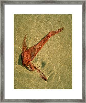Framed Print featuring the photograph Kelp 2 by Art Shimamura