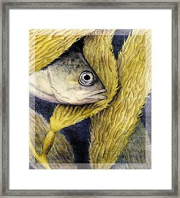 Kelp Hangout Framed Print by Kirsten Carlson