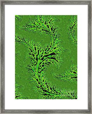 Kelp Framed Print