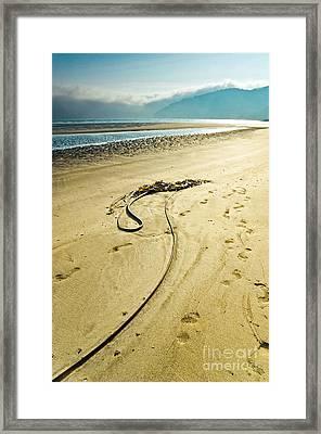 Kelp On The Seashore Framed Print
