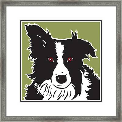 Kenai Border Collie Framed Print