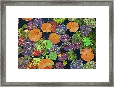 Happy Pads Framed Print