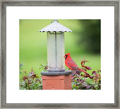 Framed Print featuring the photograph Kentucky Cardinal  by Ricky L Jones