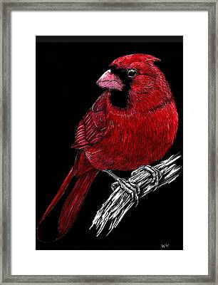 Kentucky Cardinal Framed Print