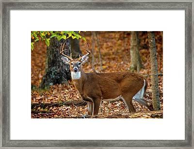 Kentucky Eight #2 Framed Print