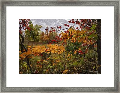 Kentucky Fall Colors Framed Print by Wendell Thompson