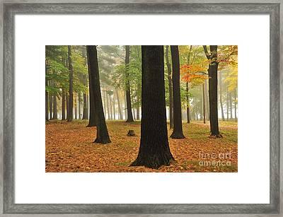 Kenwood Park Framed Print