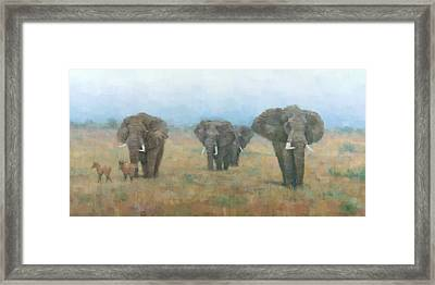 Kenyan Elephants Framed Print by Steve Mitchell